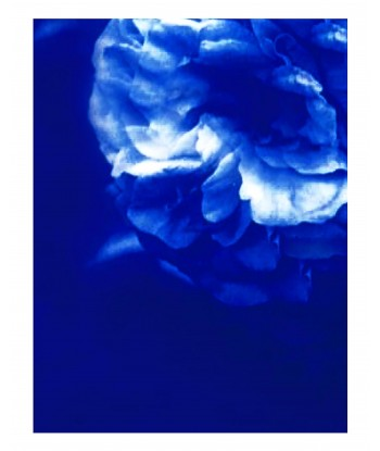 3 posters Cyanotypes